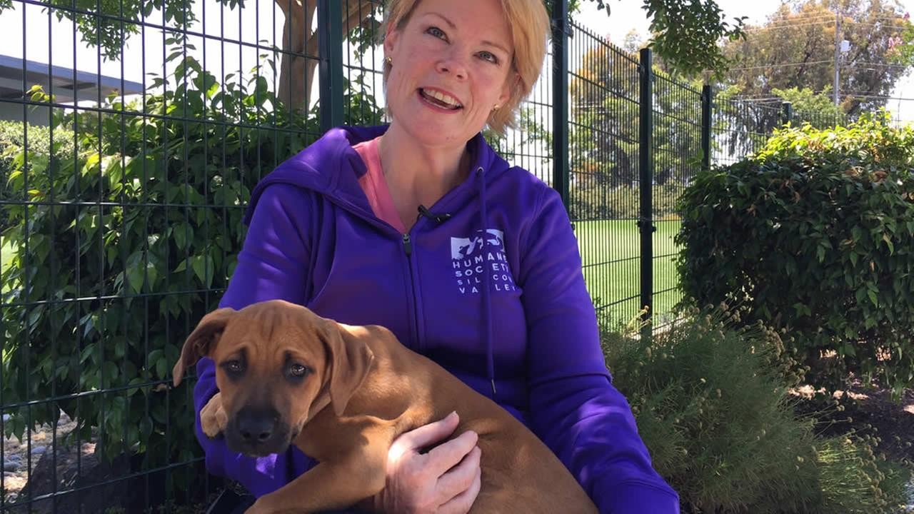 Kirsten Davis with the Humane Society Silicon Valley, is expecting lots of lost and stray pets, sacred off by fireworks on Fourth of July.