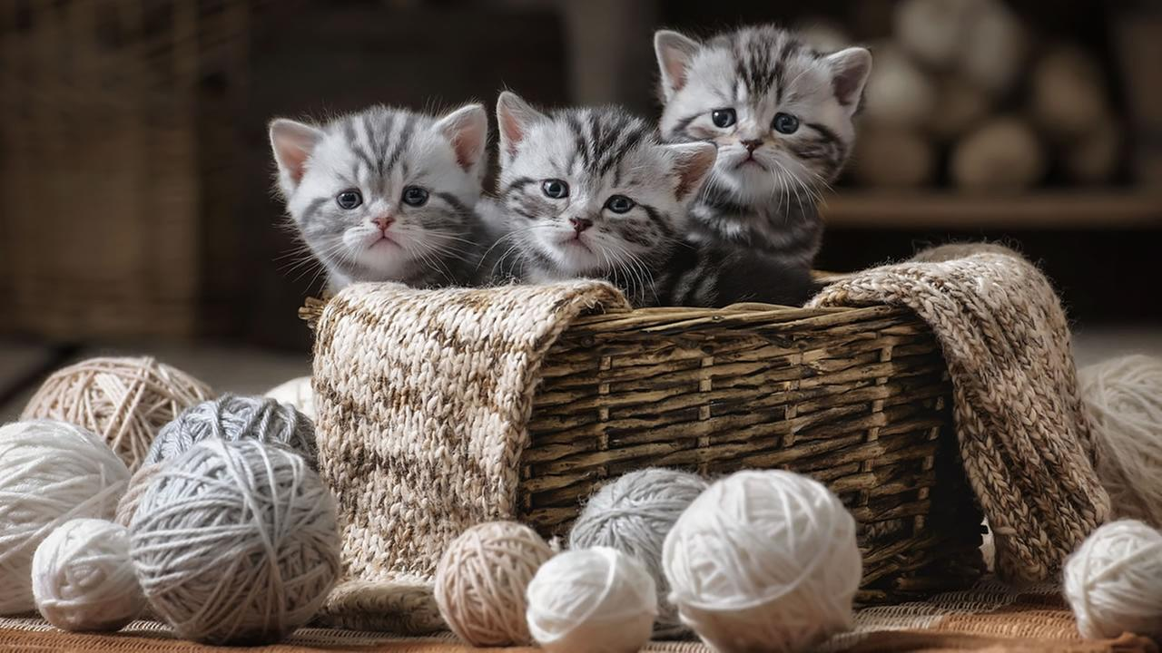 This is an undated image of kittens sitting in a basket.