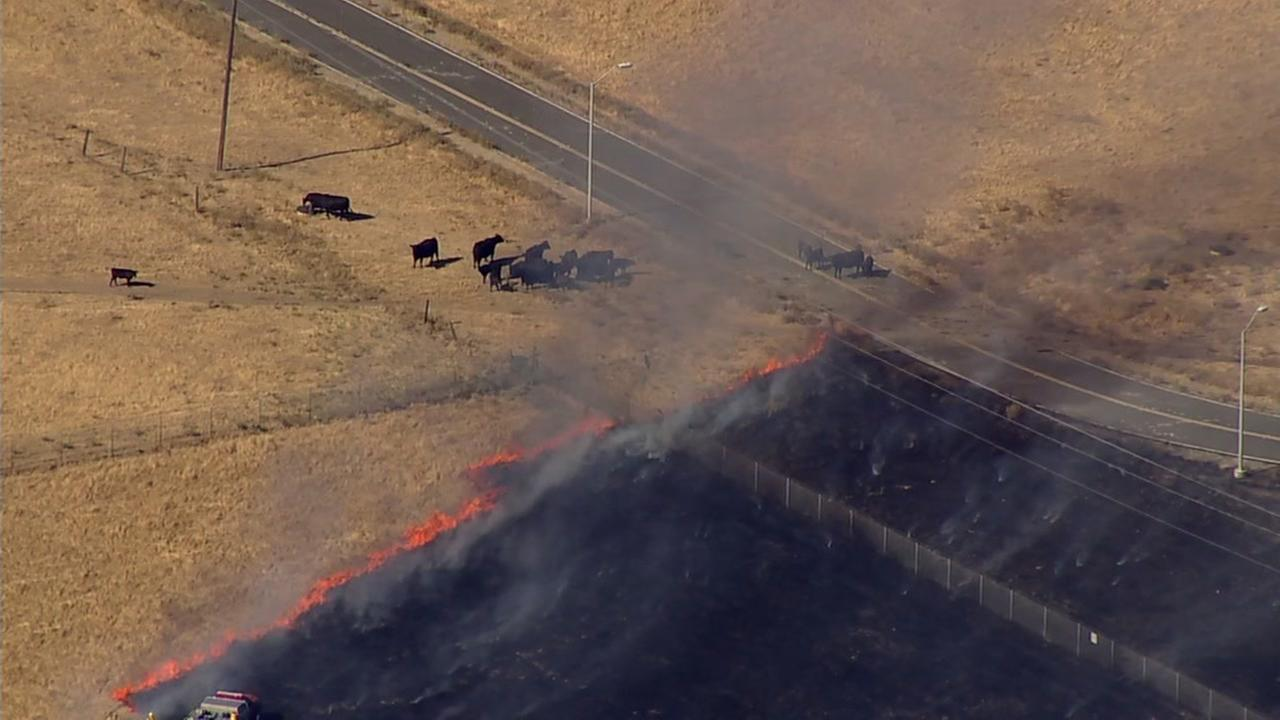 A fire in Suisun City, Calif. threatens cows, Travis Air Force Base on Thursday, July 6, 2017.