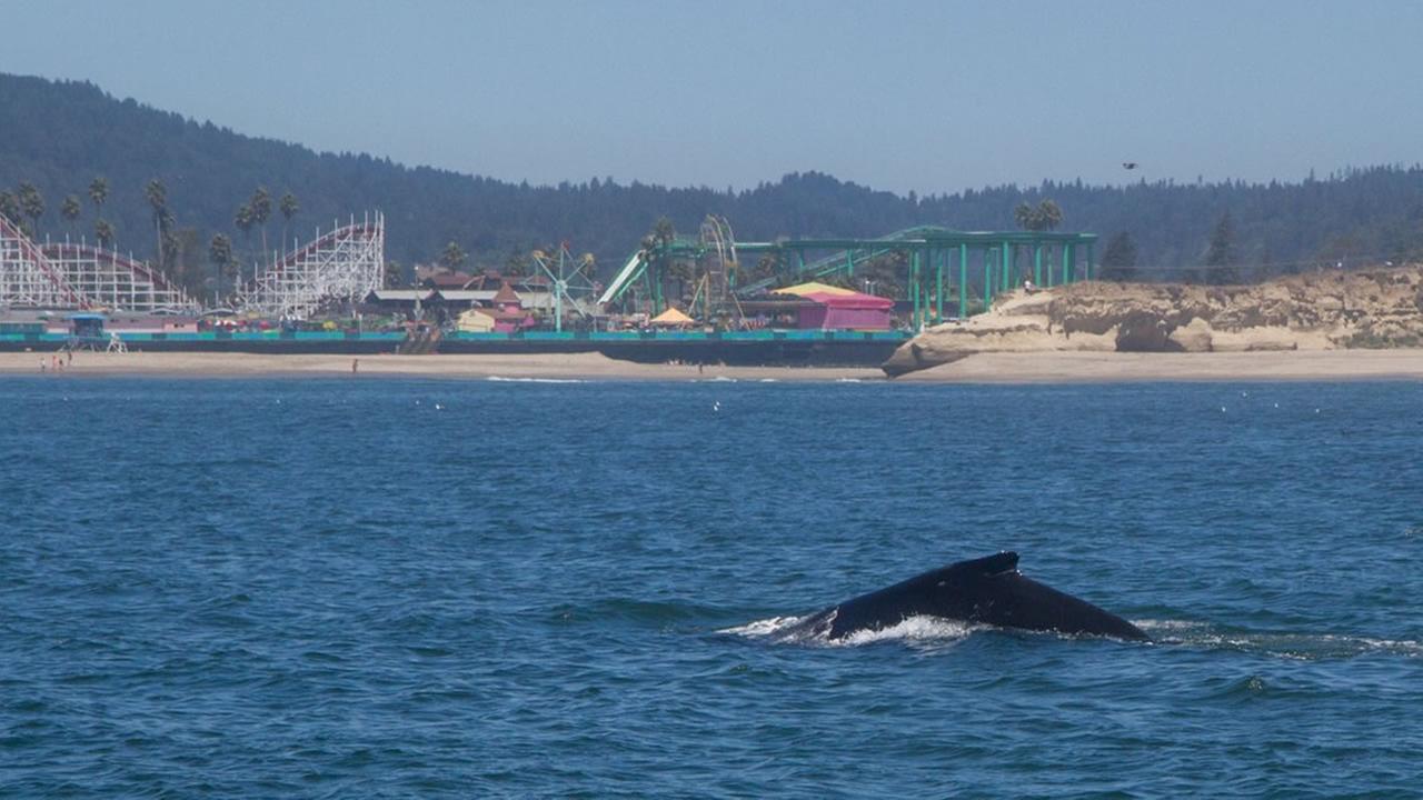 Shark watching tours see a spike in demand in Santa Cruz
