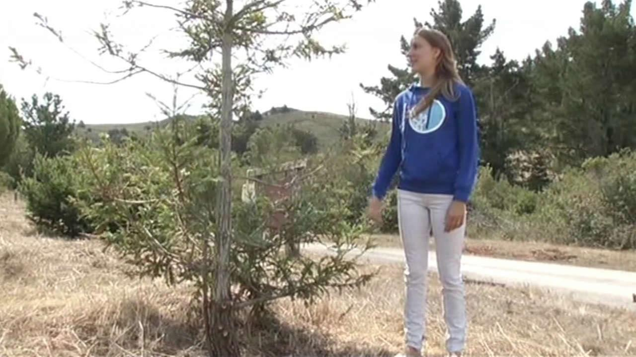 Laura Webber nears her goal of planting one million trees.