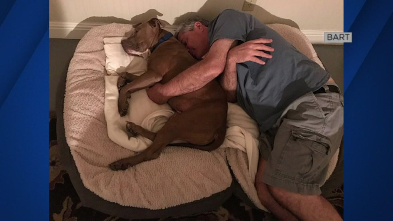 BART the dog lounges in his new home with his new owner in this undated image.