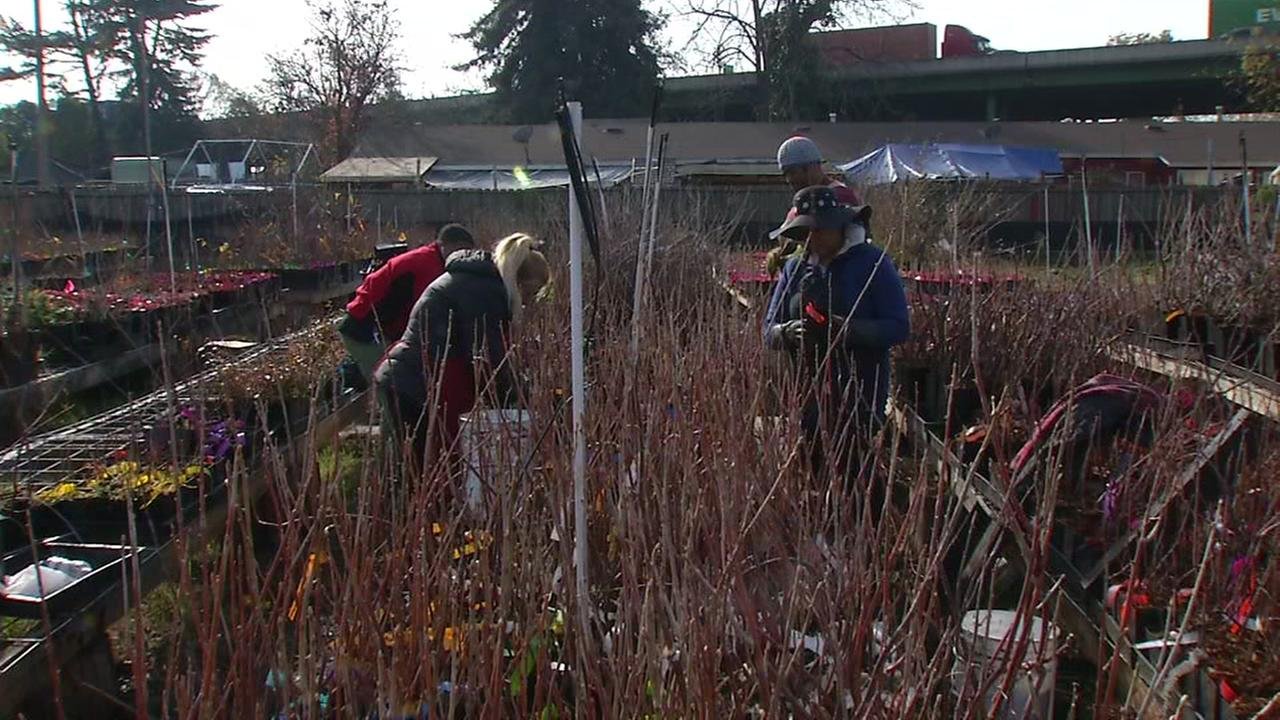 Former prisoners and volunteers work on an urban garden in East Oakland, Calif. for the nonprofit Planting Justice on Friday, Dec. 29, 2017.