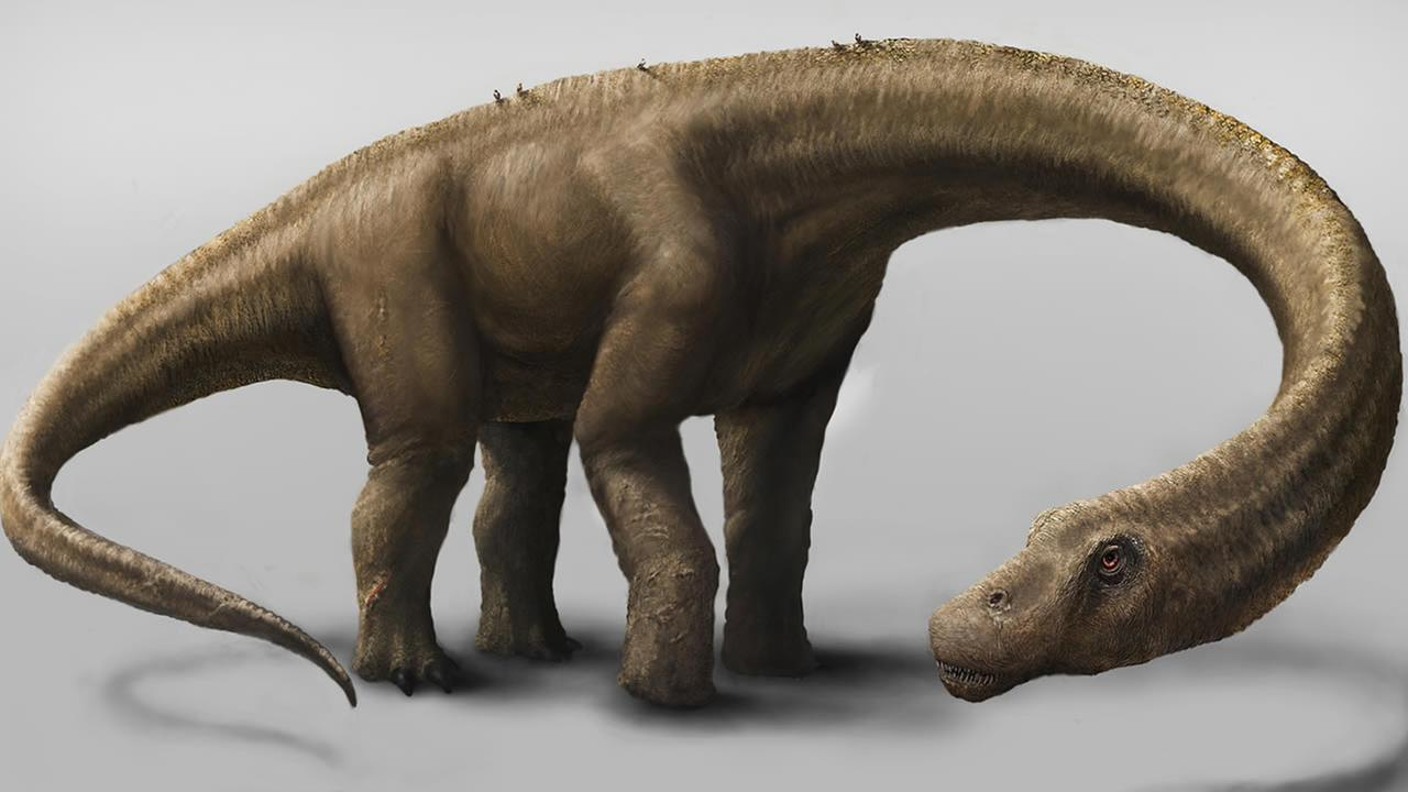This undated artist rendering provided by the Carnegie Museum of Natural History shows the Dreadnoughtus. (AP Photo/Carnegie Museum of Natural History, Mark A. Klingler)