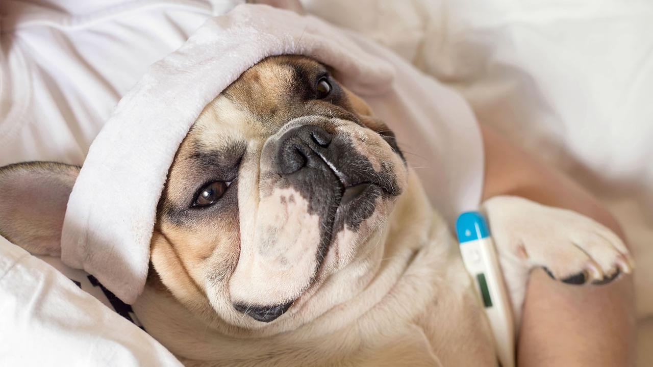 A sick dog is pictured in this undated file photo.