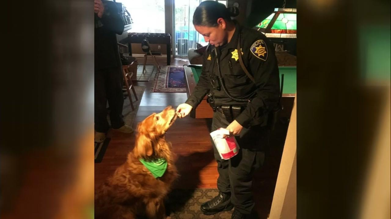 Moe the hero dog gets fed treats from a police officer as a reward for saving the life of an elderly man on Wednesday, Jan. 24, 2018 in Pittsburg, Calif.