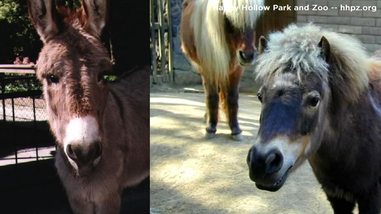 This is an undated image of three animals that were killed by a pack of dogs at a San Jose wildlife park.