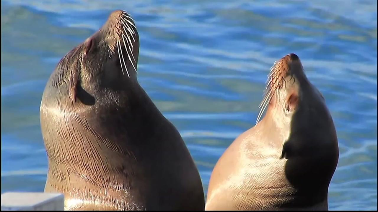 Two adorable sea lion pups appear in this undated image.