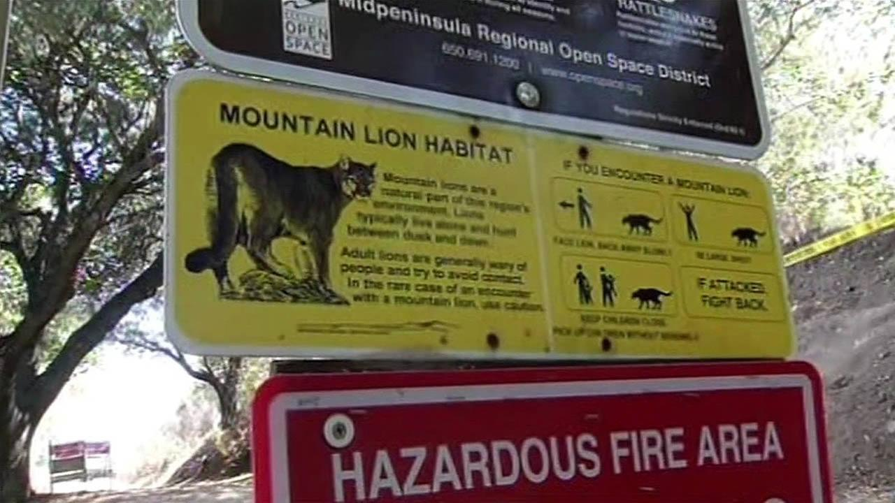 mountain lion warning sign in the Picchetti Ranch Open Space Preserve