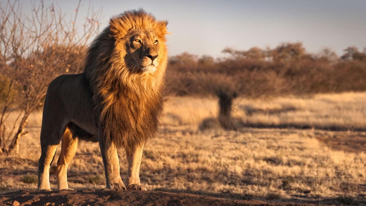 Lion shot after escaping North Carolina enclosure, killing worker