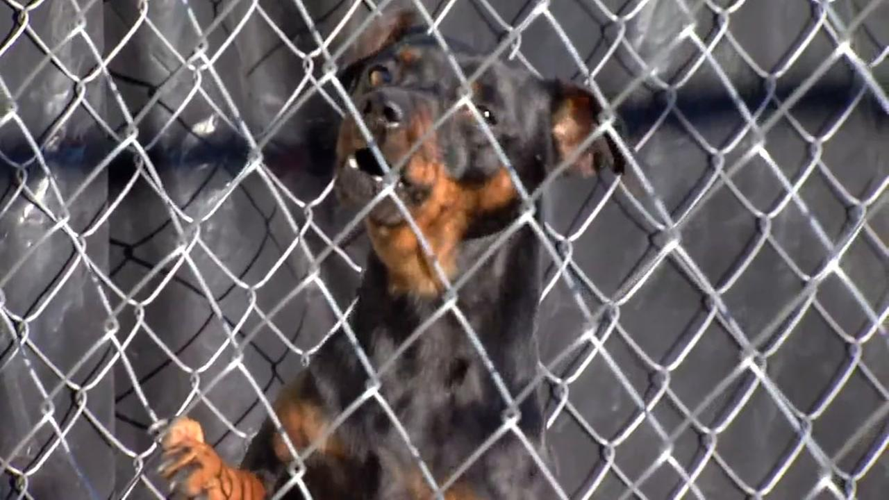 A dog appears in a cage at a suspected East Oakland puppy mill in this undated image.