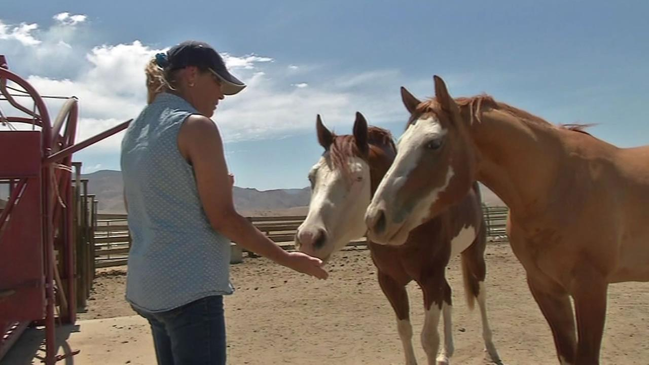 woman feeding horses at the Equine Rescue Center and Sanctuary