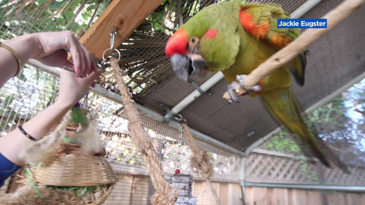 A Morgan Hill womans missing Macaw appears in this undated image.