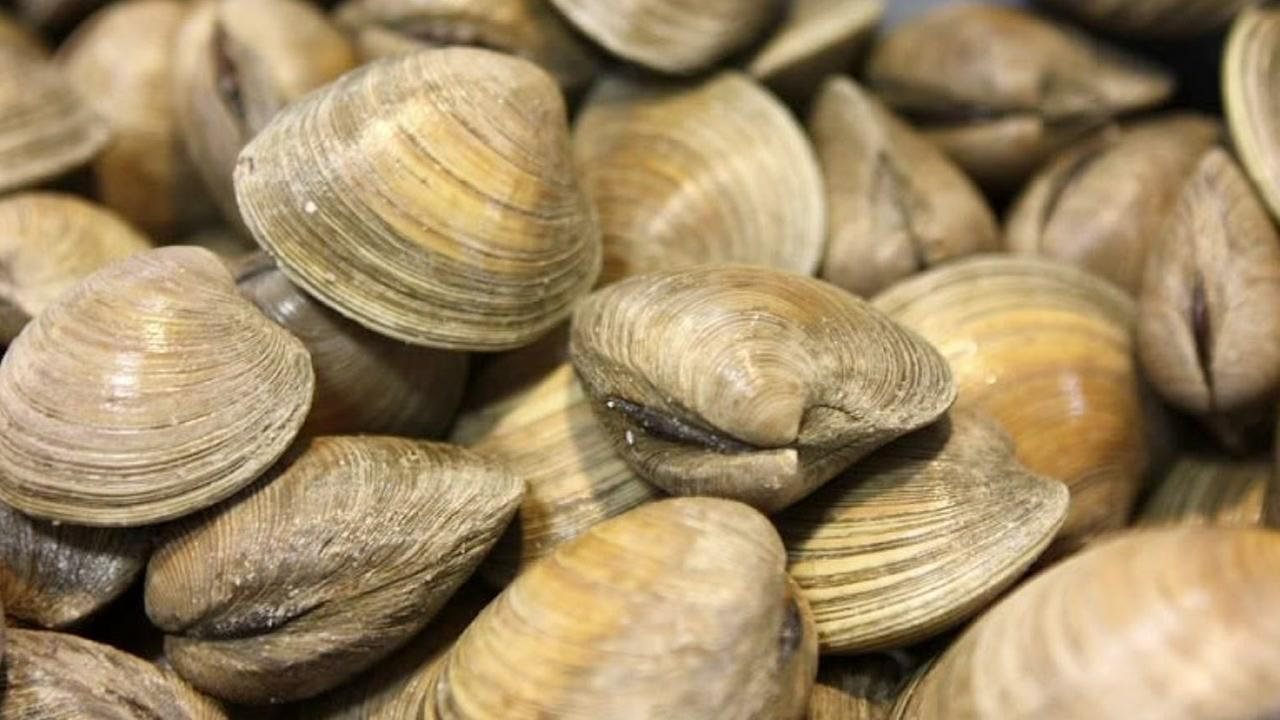 Shellfish is pictured in this undated file photo.