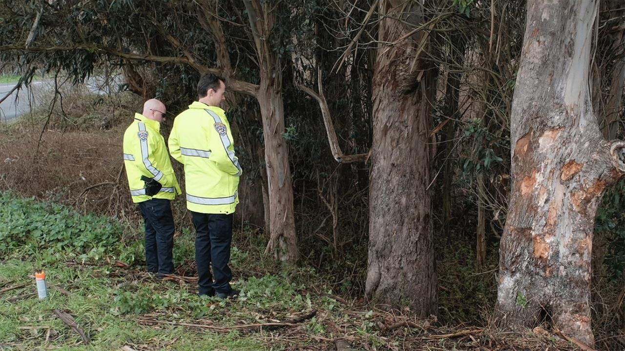 Deputies examine tree where deputy died in crash in Marin County on Thursday, March 15, 2018.