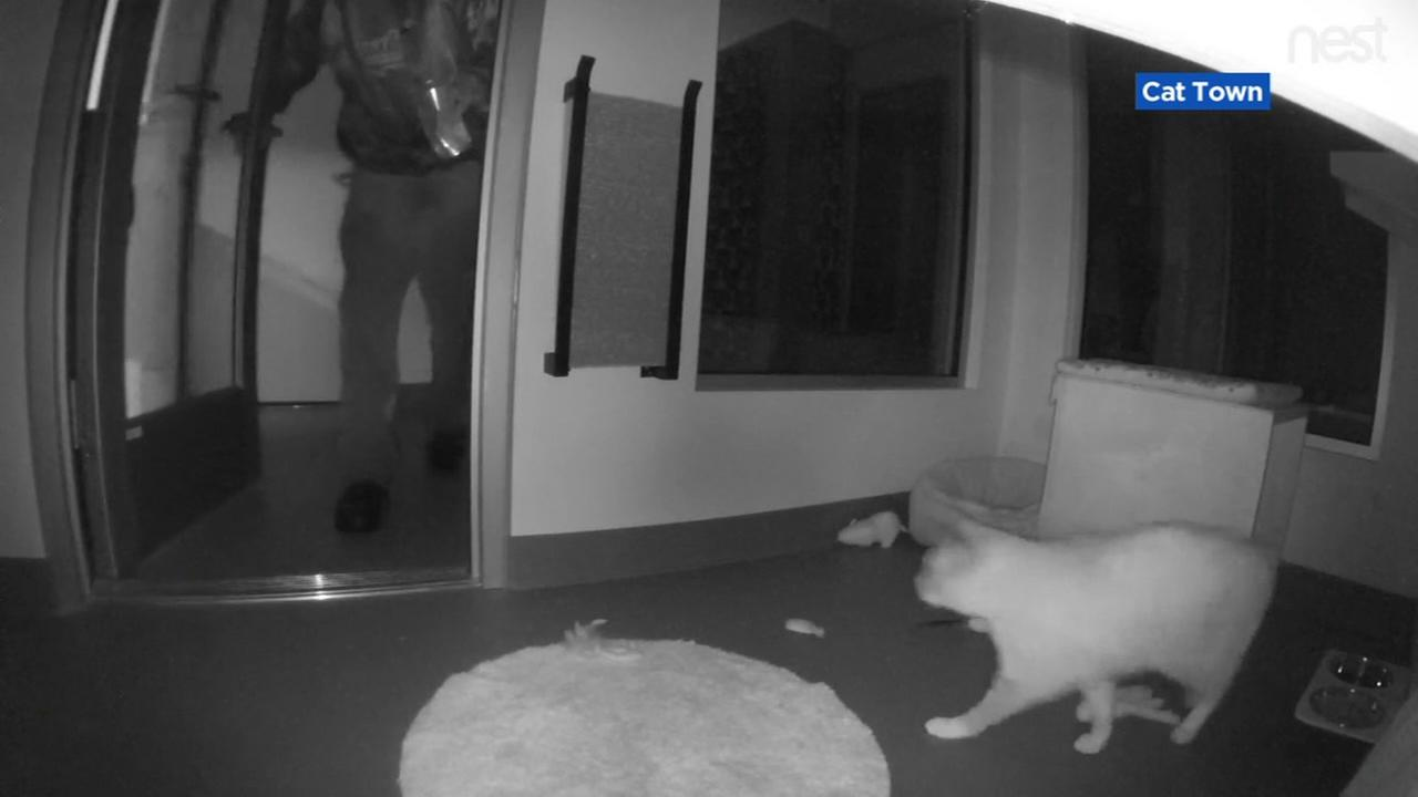 A break-in is captured on surveillance video in Oakland, Calif. at the Cat Town Adoption Center on Friday, March 16, 2018.