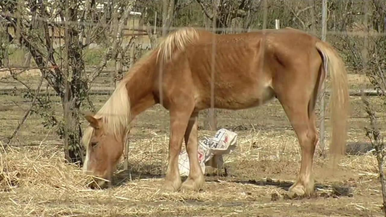 Horse ranch owner in Morgan Hill accused of neglect.