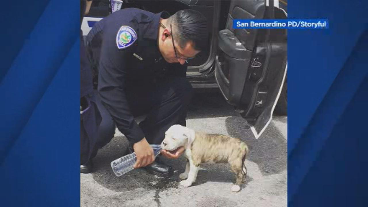 This image shows a San Bernardino Police Department officer with a puppy on March 20th, 2018.
