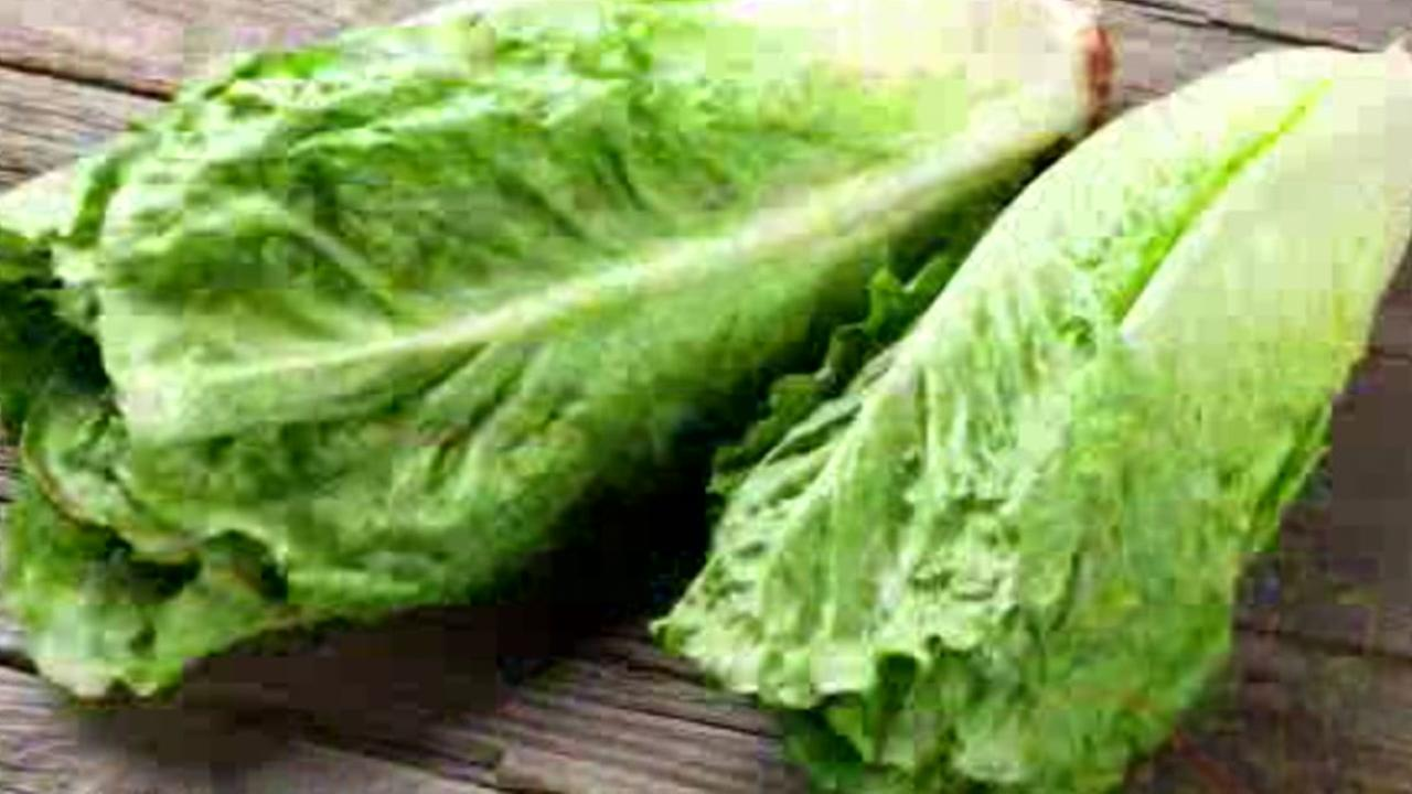 This is an undated image of lettuce.