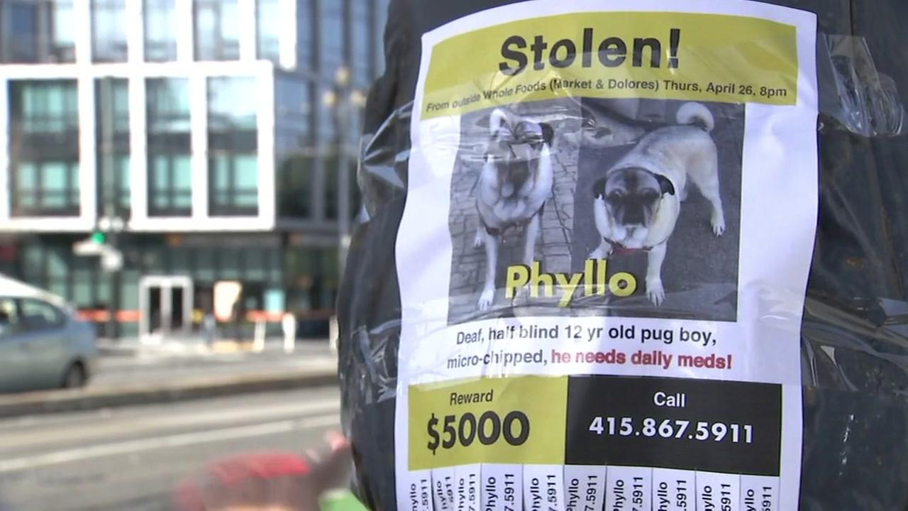 A missing poster for a pug named Phyllo appears in San Francisco after the dog was allegedly stolen outside of a Whole Foods.