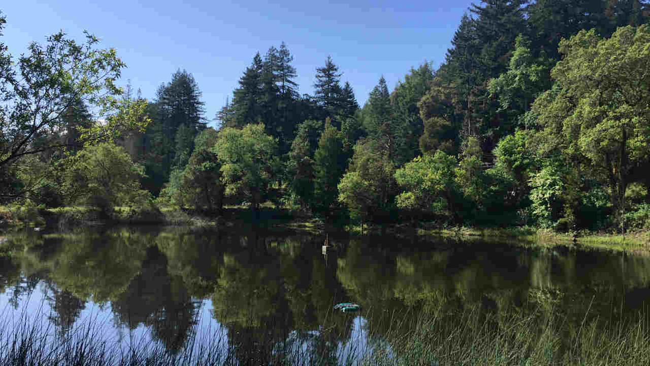 A lake is seen in the Bear Creek Redwoods Open Space Preserve in Los Gatos, Calif. in this undated image.