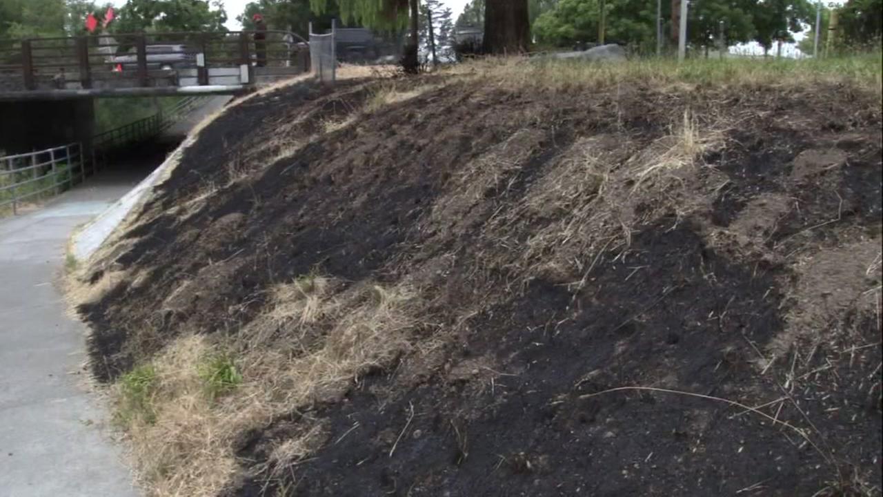 Burned grass is seen in Santa Rosa, Calif. on Sunday, June 17, 2018.