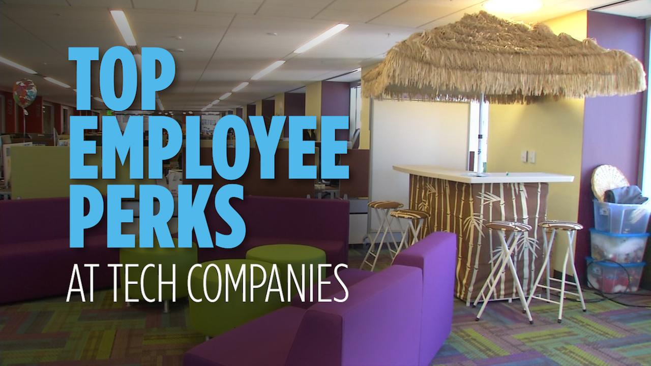 Tech companies offer some pretty extraordinary perks to attract employees, including free massages, house cleaning, egg freezing and even the use of a company yacht.