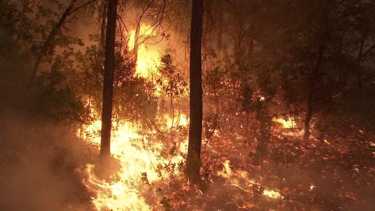 Flames engulf trees in Shasta County, Calif during the Carr Fire on Friday, July 27, 2018.