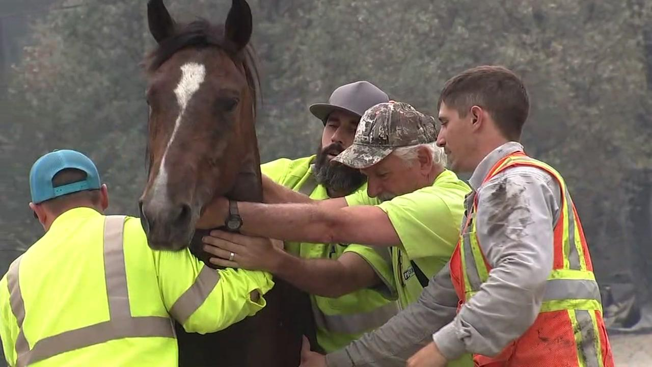 A group of men works to rescue a horse near Redding, Calif. on Monday, July 30, 2018.