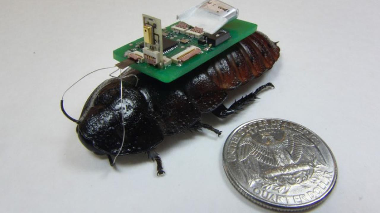 Cockroaches could help in the next bog disaster situation.