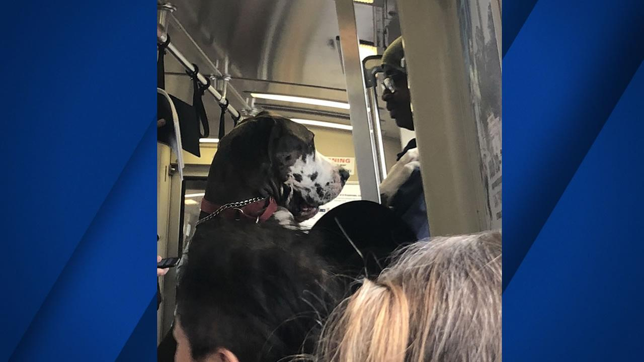 A Great Dane was spotted standing on its two feet on BART in a tweet posted on Wednesday, August 15, 2018.