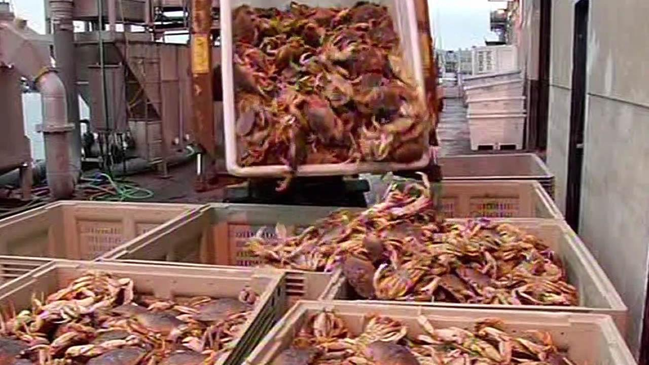 Crab loads are being dumped and at San Francisco Pier 45