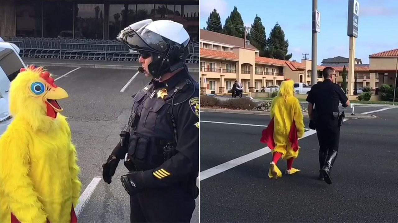 Chicken decoy used by police in Sunnyvale on Friday, August 31, 2018.