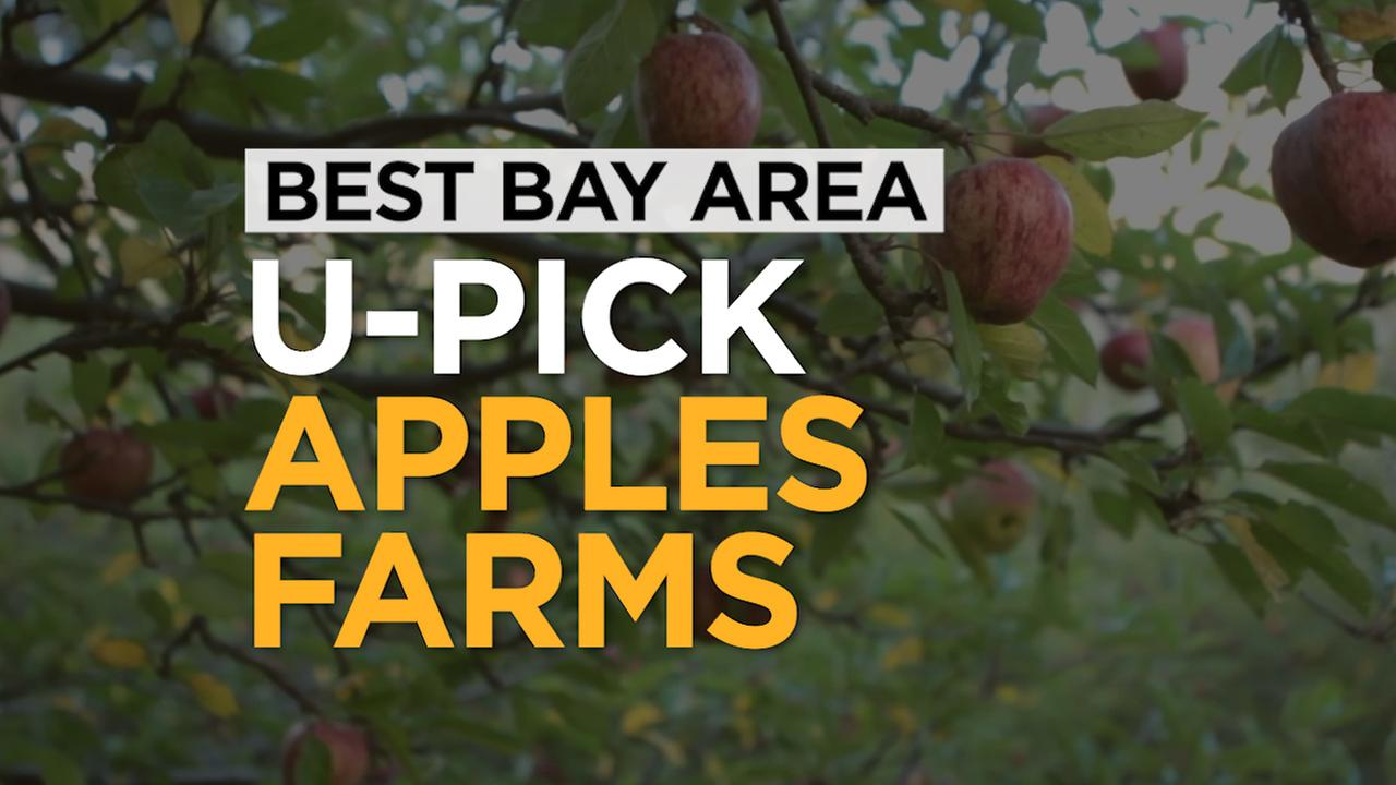 There is nothing like a tree-ripened apple. Here is a list of the best places to go apple picking in the San Francisco Bay Area.