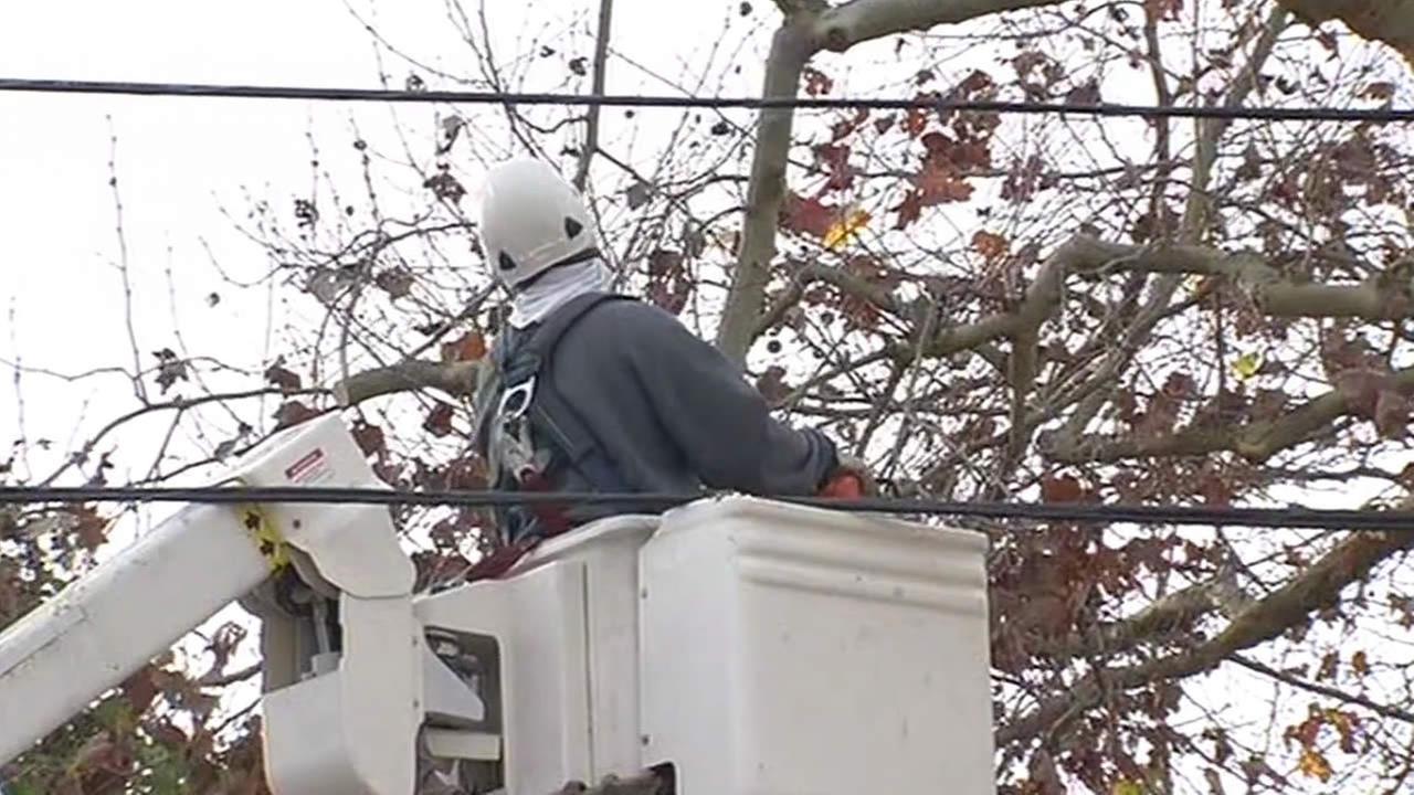 Crews trim trees