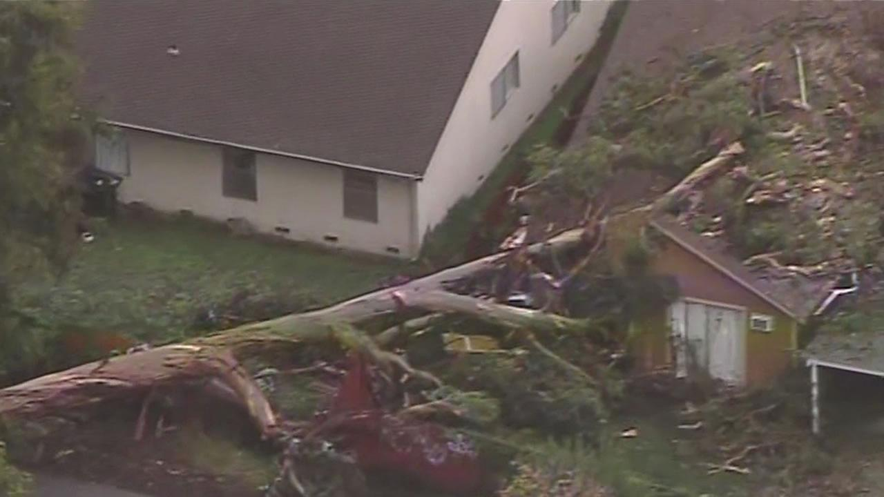 A Eucalyptus tree crashes into a care facility on Trefry Court in Union City.