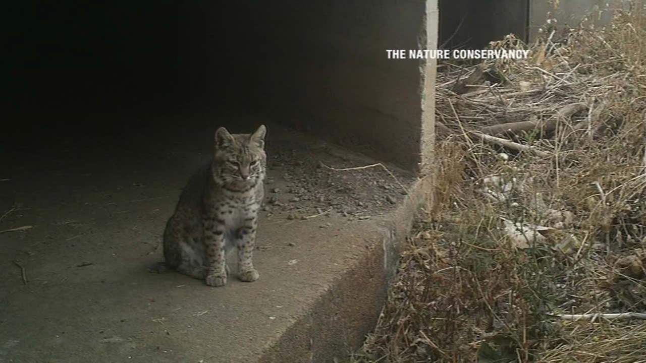 A bobcat sits near a blocked culvert under a road.
