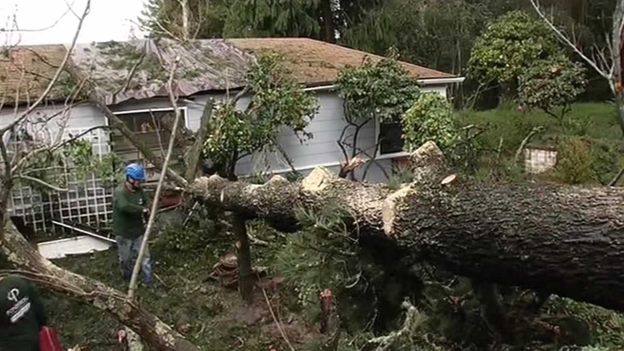 Most insurance policies dont cover flooding, but will cover damage from falling trees or wind.