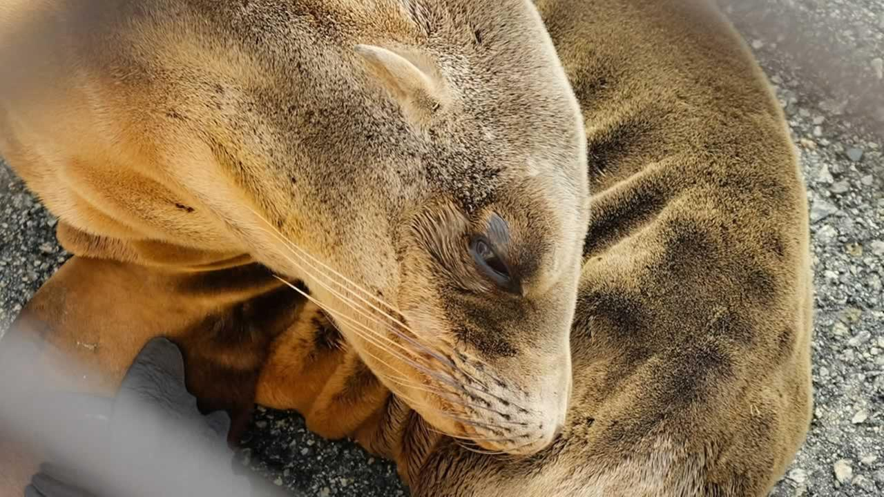 A sea lion pup was rescued near San Franciscos Lake Merced on Wednesday, Feb. 11, 2015.