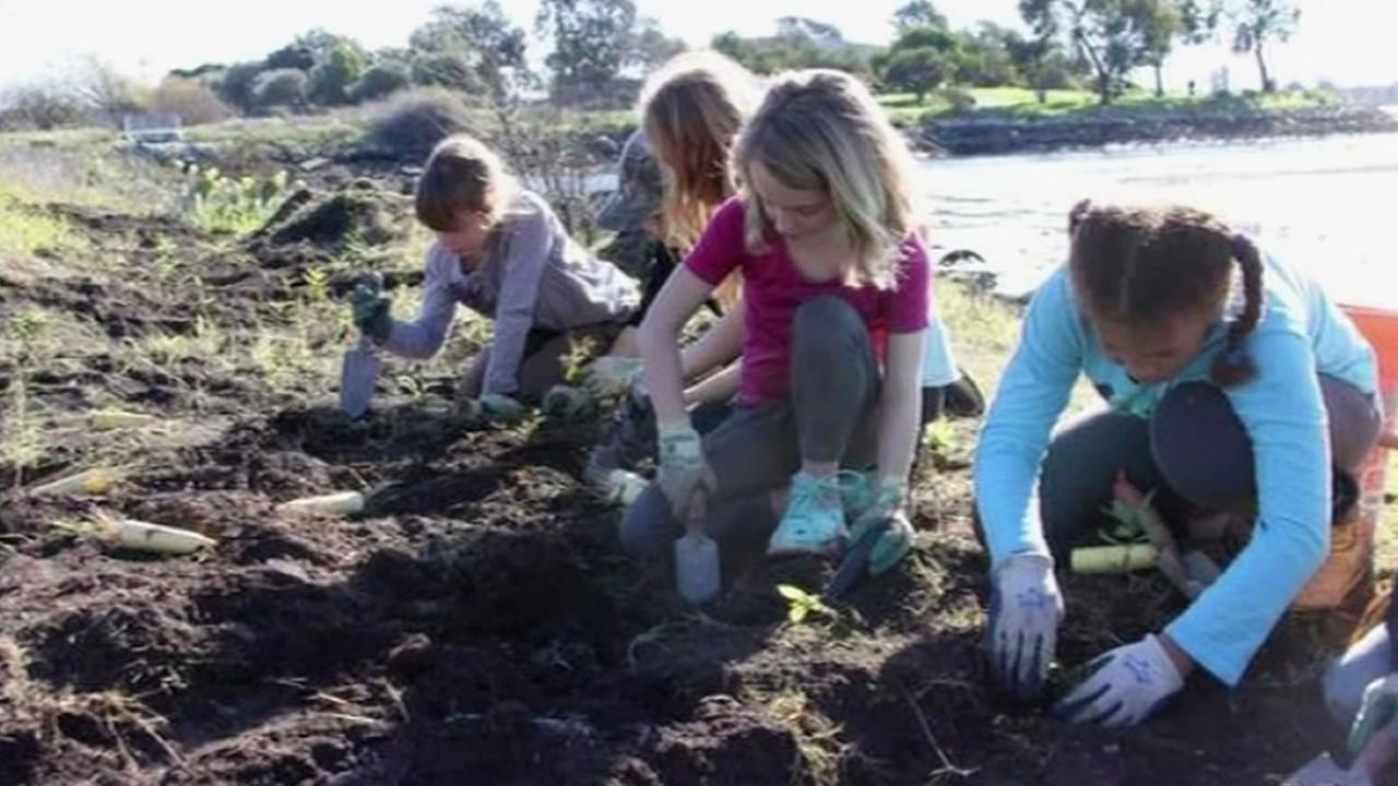 Oaklands Park Day School garden