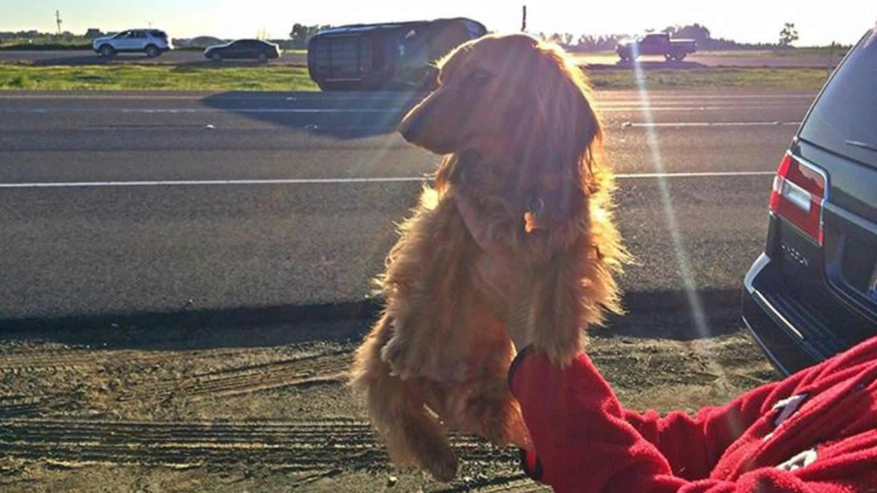 A good Samaritan and her dog Frankie Furter helped a teen involved in a solo vehicle crash in Antioch, Calif. on March 12, 2015.