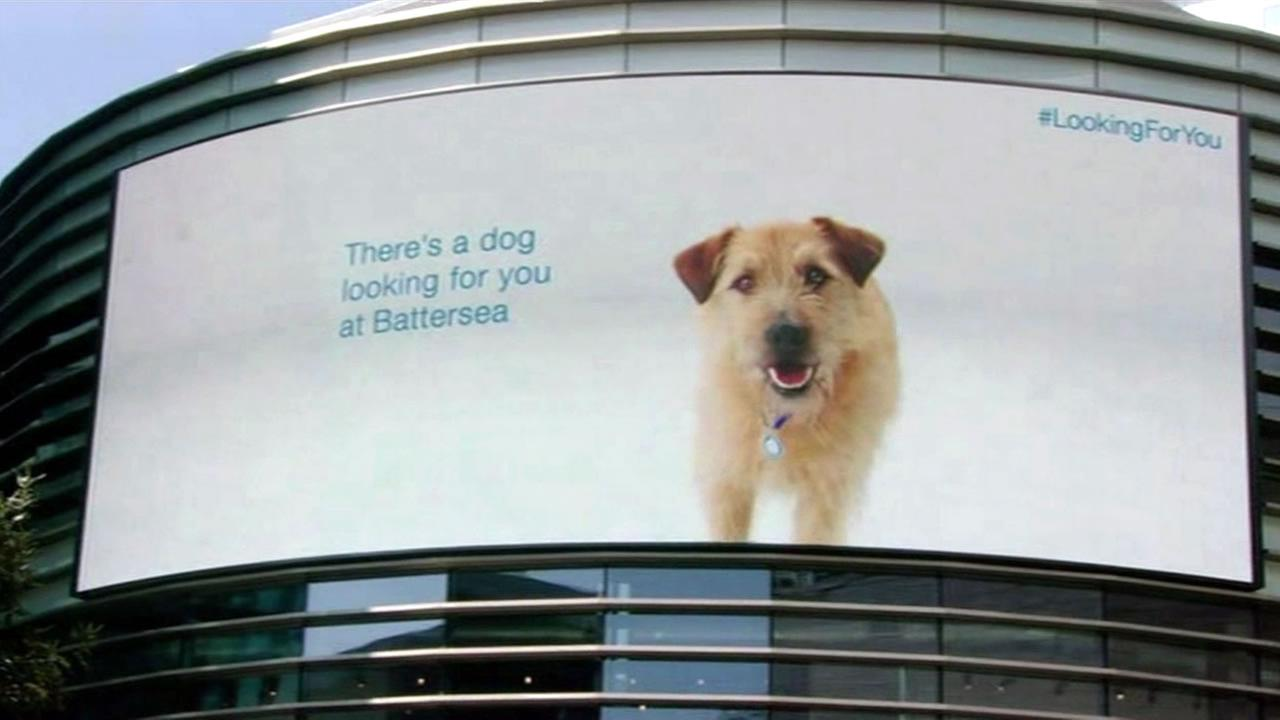 A digital billboard promotes pet adoptions for Battersea Dogs and Cats  at East Londons Westfield Stratford mall in May 2015.