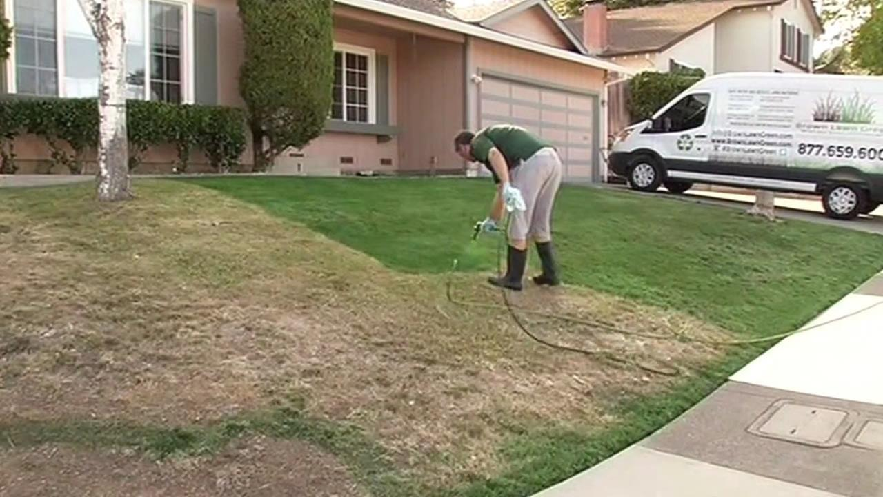 Bay Area Homeowners Turn To Paint Cover Brown Lawns