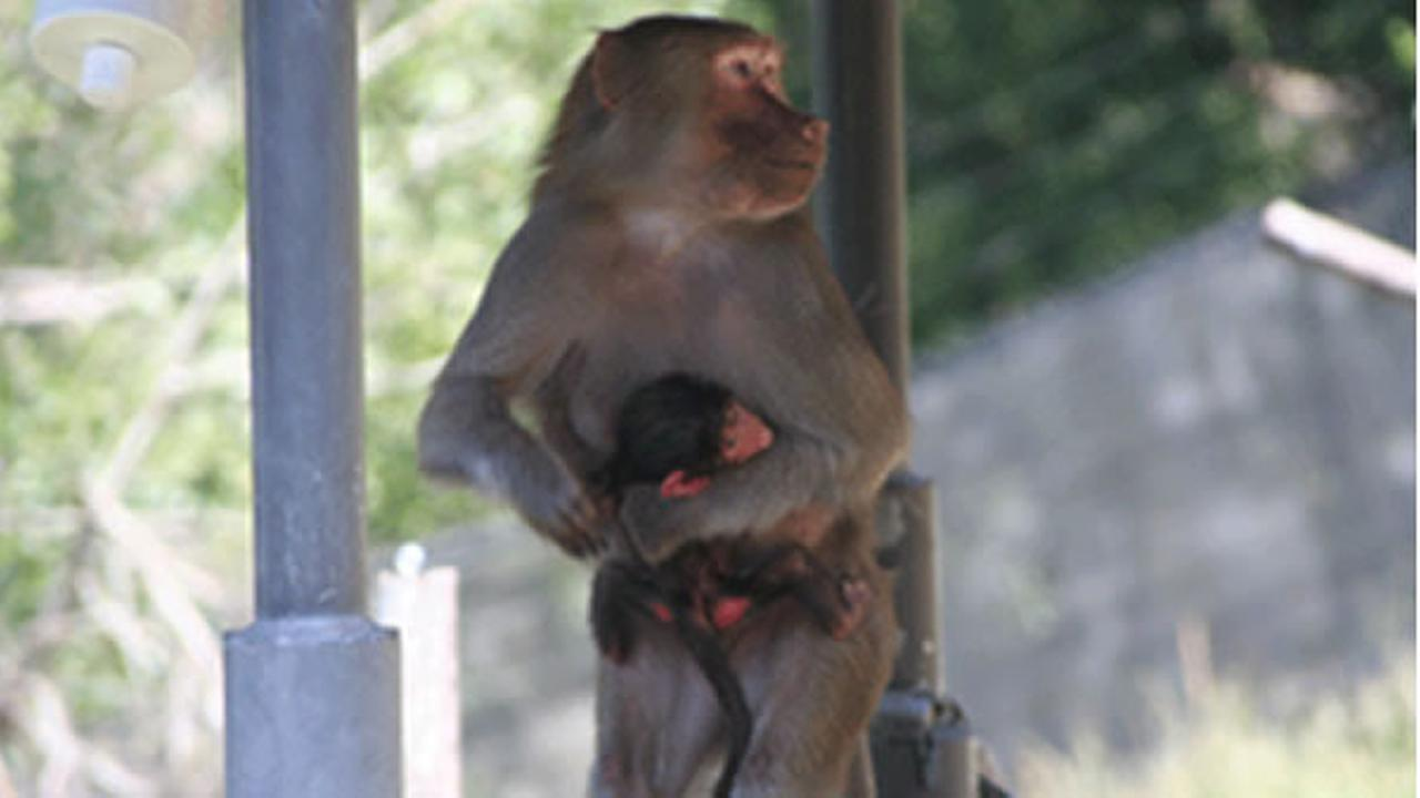 Mimi is the third baby baboon born at the Oakland Zoo in the last year and a half.