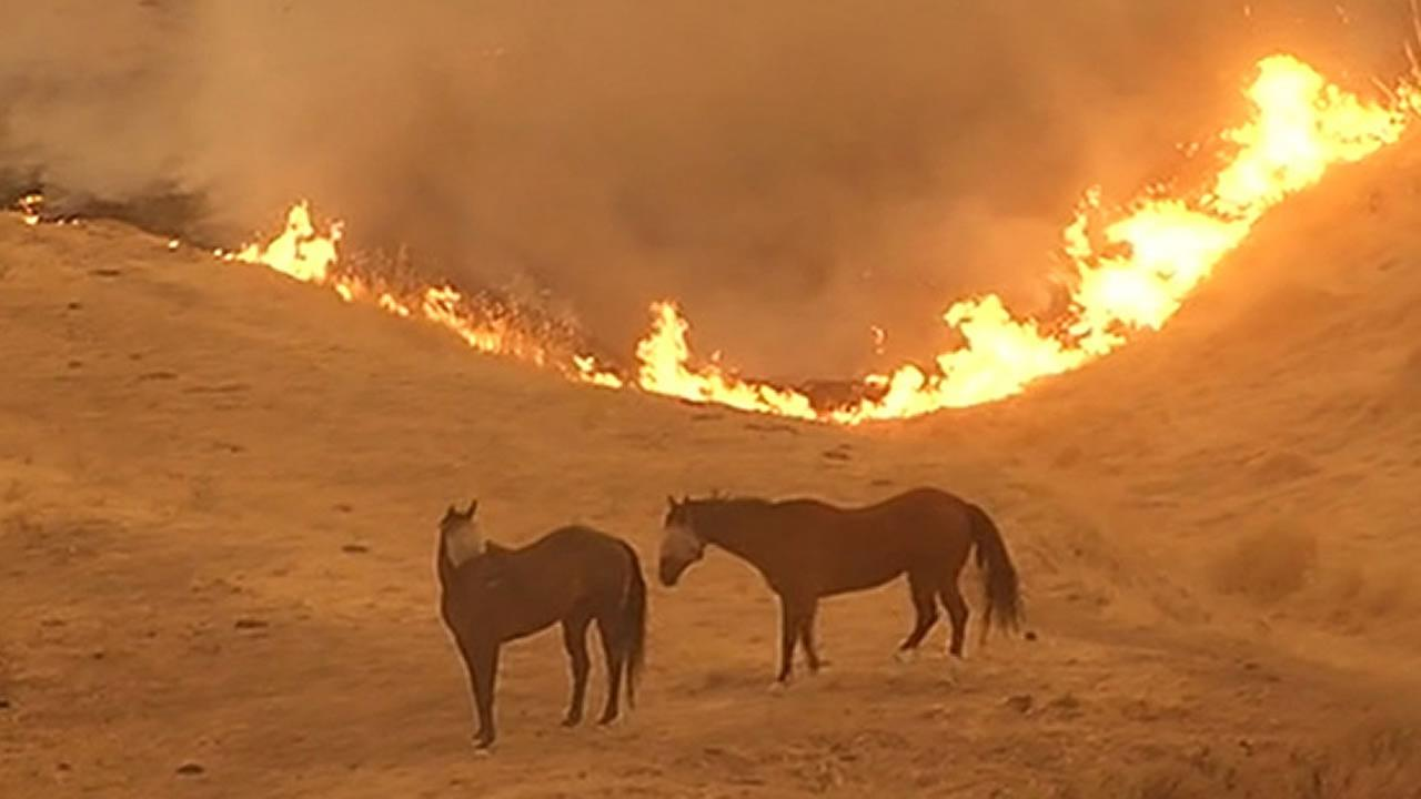 two horses standing by the Wragg Fire