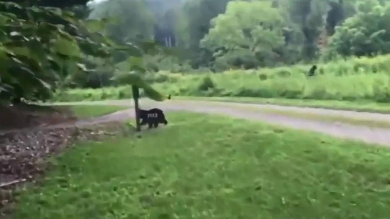 Eric Walters videotaped what he claims was a Sasquatch sighting while vacationing in North Carolina.