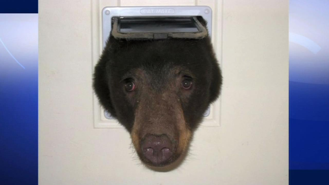 An Idaho man snapped this photo of bear who stuck his head through the cat door of his home in Idaho.