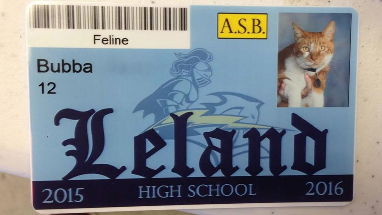 A cat named Bubba was issued a student body card for Leland High School in San Jose, Calif.