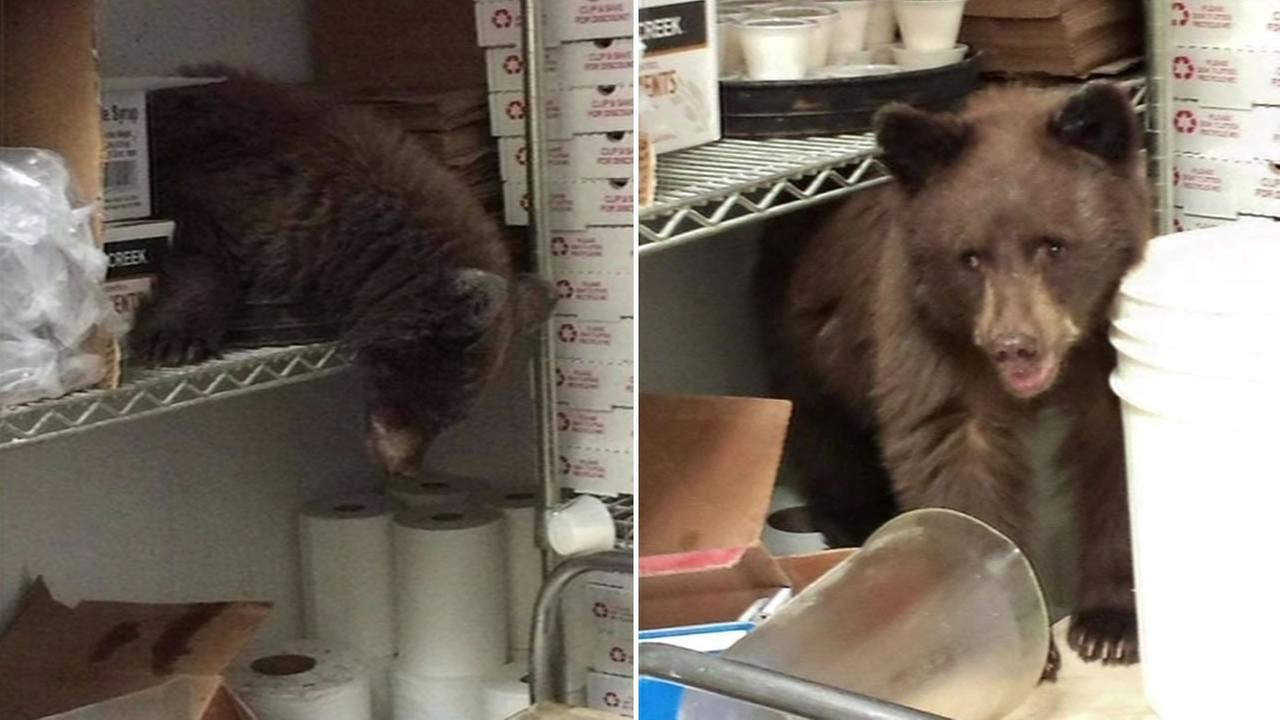 A bear broke into a pizzeria in Colorado Springs, Colorado on Monday, September 14, 2015.