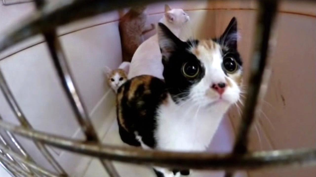Valley Fire evacuee Christine Bartholomew was excited to return home on Friday, September 18, 2015 and see that the cats she rescues survived the devastating fire in Cobb, Calif.